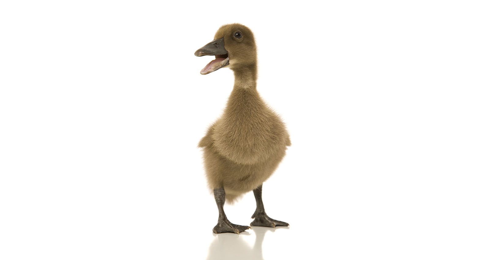 What Does an Ugly Duckling and Melanoma Have in Common?